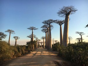 John and the team are scoping out the roads for our Magical Madagascar 2019