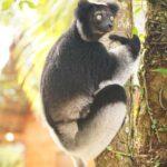 Magical Madagascar Day 4 - June 18th – Andasibe and MantadiaNational Park